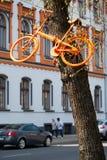 Cyklar som hänger i träden Arkivfoto