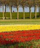 Cyklistów następy zestrzelają drogę w Zachodnim Friesland, holandie Obrazy Stock