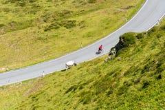Cyklist med kon Arkivfoton