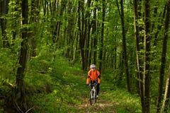 Cyklist på skogvägen Arkivbilder
