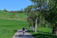 Cyklista na ?ladzie w pi?knym wiosna krajobrazie w Odenwald, Niemcy obraz royalty free