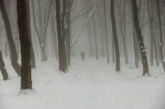 Cyklister som springer in i den dimmiga vinterskogen royaltyfria foton