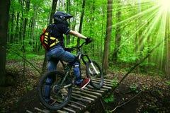 cyklistträ Fotografering för Bildbyråer