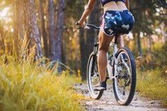 Cyklisty kolarstwa rower górski na Sosnowym lasowym śladzie Zdjęcie Royalty Free