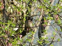 Cyle Bird stock photos