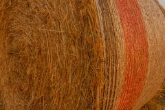 Close-up of a hay cylindrical bale in a field. Cylindrical bale of hay called round bale packed in colored nets Royalty Free Stock Image