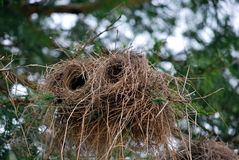 Cylindrical bird's nest Royalty Free Stock Photos