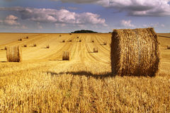 Cylindrical Hay Bales Royalty Free Stock Photo