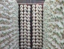 Cylindrical mushroom grower Stock Photos