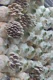 Cylindrical mushroom grower Stock Photo