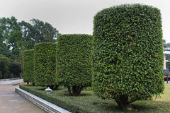 Cylindrical trimmed shrubs at People`s Park in Nanning, China. Royalty Free Stock Photos