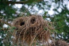 Cylindryczny bird& x27; s gniazdeczko Zdjęcia Royalty Free