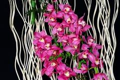 Cymbidium of bootorchideeënachtergrond stock afbeeldingen