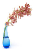 Cymbidium orchid in blue glass vase Royalty Free Stock Image