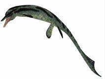 Cymbospondylus Ichthyosaur Profile Stock Photos