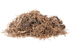 Cynanchum Root Stock Photos