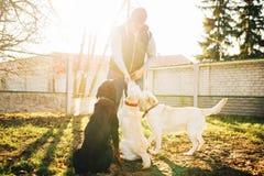 Cynologist与警察狗一起使用,训练外面 免版税库存图片