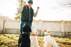 Cynologist работает при собаки полисмена, тренируя снаружи Стоковые Фотографии RF