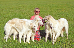 Cynologist with the thoroughbred borzoi dogs. Irina Korshunova - the Moscow cynologist with the thoroughbred borzoi dogs. Russian borzoi dog - very courageous royalty free stock photos