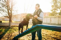 Cynologist trains a dog to keep balance. On playground. Owner with his obedient pet outdoor, bloodhound domestic animal Royalty Free Stock Photos