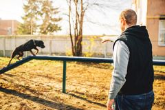 Cynologist trains a dog to keep balance. On playground. Owner with his obedient pet outdoor, bloodhound domestic animal Stock Photos