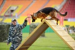 Cynologists com os cães em Moscou Foto de Stock