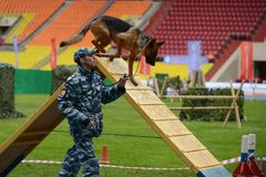 Cynologists com os cães em Moscou Imagem de Stock