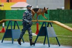 Cynologists com os cães em Moscou Fotografia de Stock