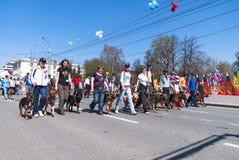Cynologists dal club dell'allevamento di cane sulla parata Immagine Stock