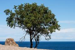 Cypern strand Cliifs Royaltyfria Foton