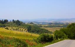 Cypern träd och vallmo i Tuscany, Italien arkivfoto