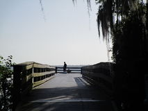 Cypess树湖边 库存照片