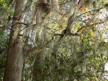 Cypess树湖边 库存图片