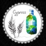 cyprès Photographie stock