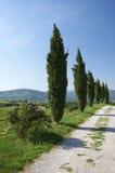 cyprès Photographie stock libre de droits