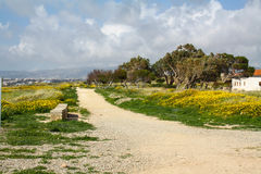 Cypr droga Pola wiosna kwiaty, Cypr Rewolucjonistka i kolor żółty kwitniemy, niebieskie niebo i chmury Obrazy Royalty Free