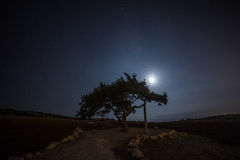 Cypr stary drzewo na tle nocne niebo Iluminująca backlit księżyc Obrazy Stock