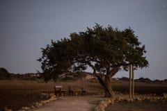 Cypr stary drzewo na tle nocne niebo Iluminująca backlit księżyc Fotografia Stock