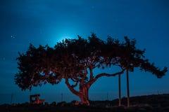Cypr stary drzewo na tle nocne niebo Iluminująca backlit księżyc Obraz Royalty Free