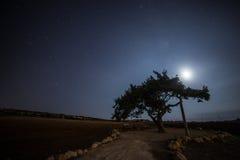 Cypr stary drzewo na tle nocne niebo Iluminująca backlit księżyc Obraz Stock