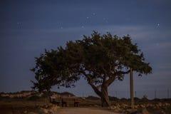 Cypr stary drzewo na tle nocne niebo Iluminująca backlit księżyc Zdjęcia Royalty Free