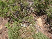 Cypr Troodos g?ry Panorama dzicy halni lasy przy wysoko?ci? 1900 metr?w nad poziom morza obraz stock