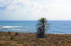 Cypr wyspy dennego wybrzeża drzewko palmowe na skalistej plaży fotografia royalty free