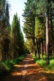 Cypres Bäume entlang Straße stockbilder