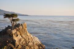 Cypres solitários movimentação de 17 milhas Fotografia de Stock Royalty Free