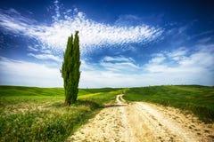 Cypress изолировал в тосканской сельской местности, ` Orcia Val d, Сиене, Италии стоковые изображения rf