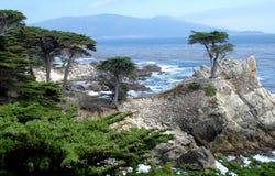 Cypress на горном склоне гранита в Pebble Beach Стоковые Изображения