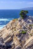 Cypress на утесе, заповеднике Lobos пункта естественном Стоковые Изображения