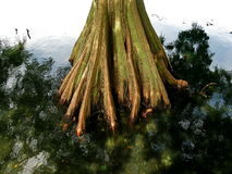 Cypress Stock Photography