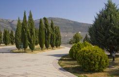 Cypress Imágenes de archivo libres de regalías